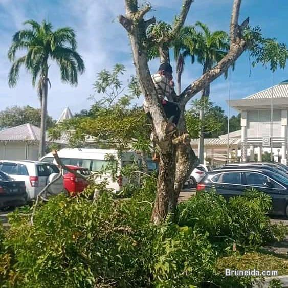 Pictures of Tree Cutting & Landscape Services