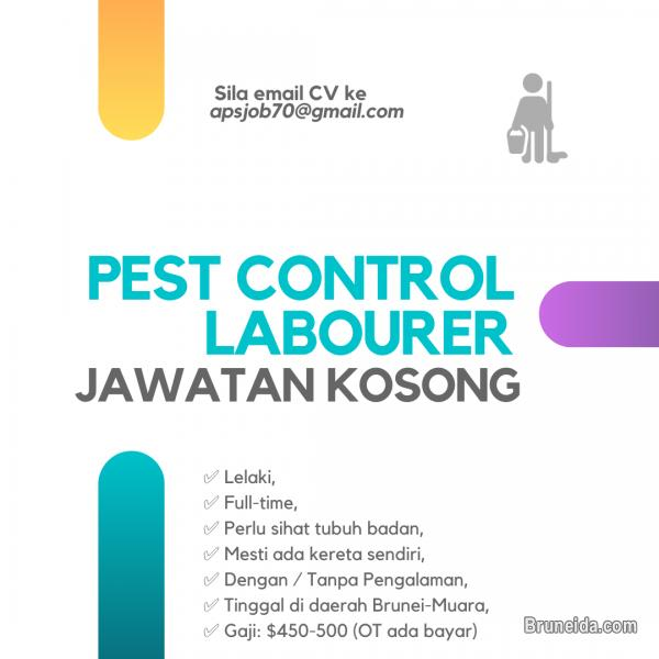 Pictures of Pest Control LABOURER