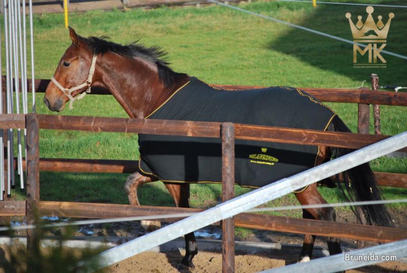 Horsewalker - image 9