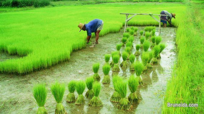 Agriculture Food Laboratory Set up consultant in Brunei