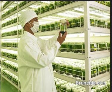 Picture of Plant Tissue Culture Laboratory Set up services