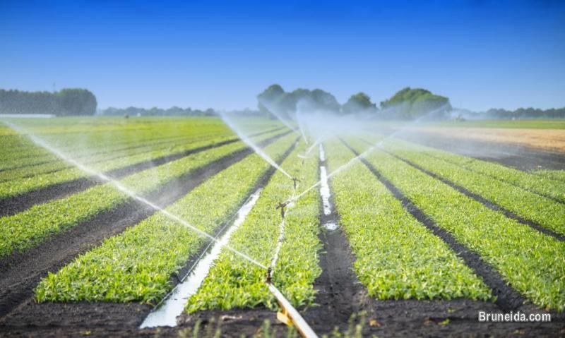 Picture of Farm Management Services
