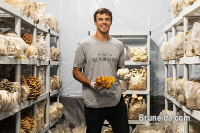 Picture of Dry mushroom supplier in brunei