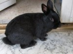 Animals for Sale (Rabbits, Hamsters, Mice, Pacu fish)