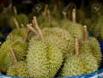 Fresh durians for sale