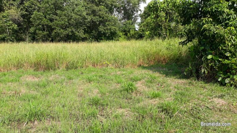 Picture of Land for sale