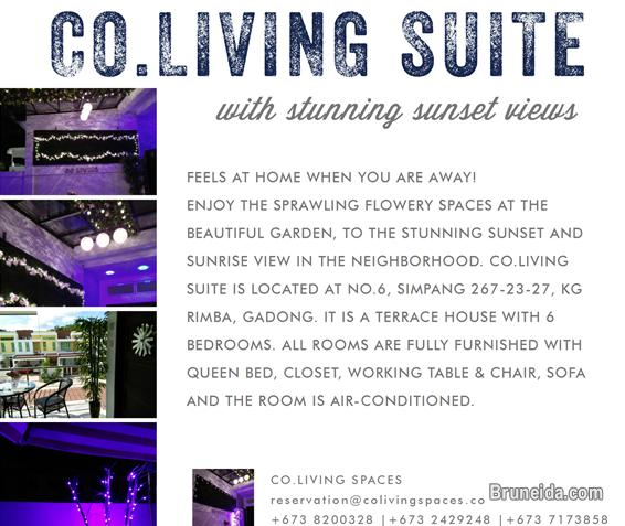 Co. Living Suite