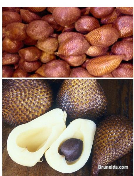 Picture of Snake Fruit