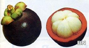 Picture of Mangosteen