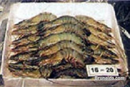 Pictures of Frozen Shrimp